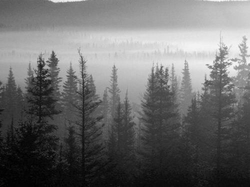 blackmetal forest
