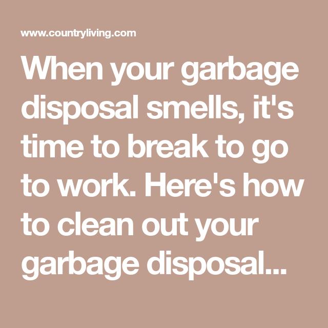 Photo of Sie sollten Ihre Müllentsorgung wirklich einmal pro Woche reinigen