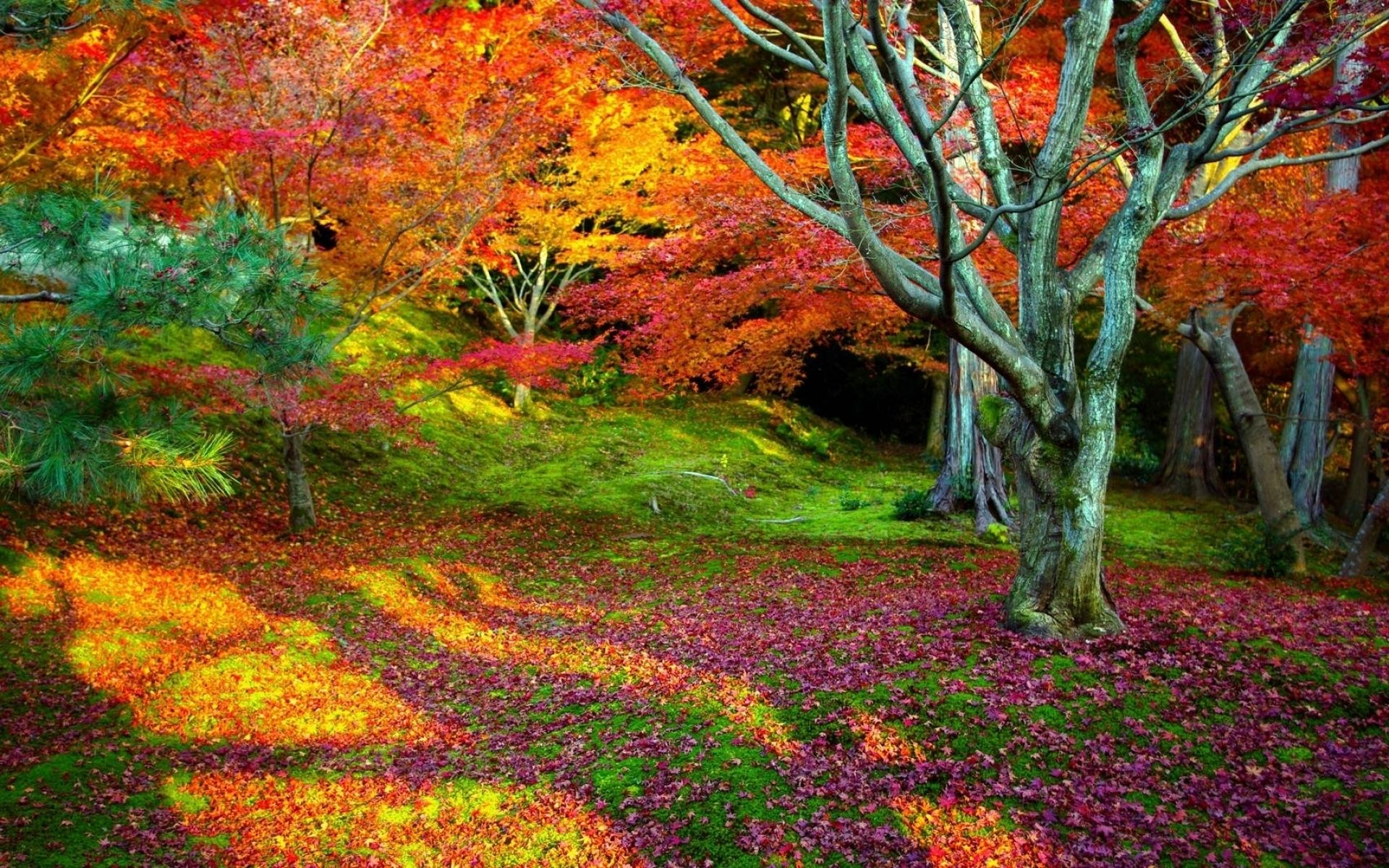 Do I like fall…at all?   Nature wallpaper, Autumn and Autumn leaves ...