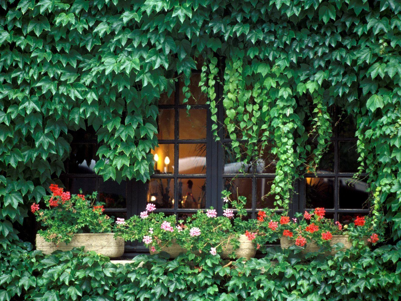 Ivy Window - Provence, France