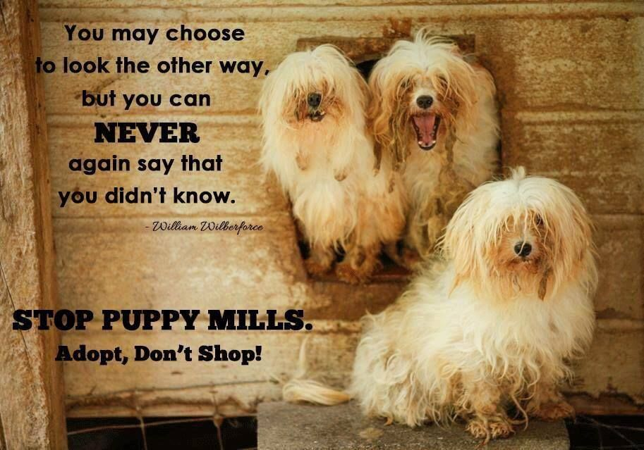 You may choose to look the other way, but you can never again say you didn't know. #nomorepuppymills #adoptdontshop #rescue