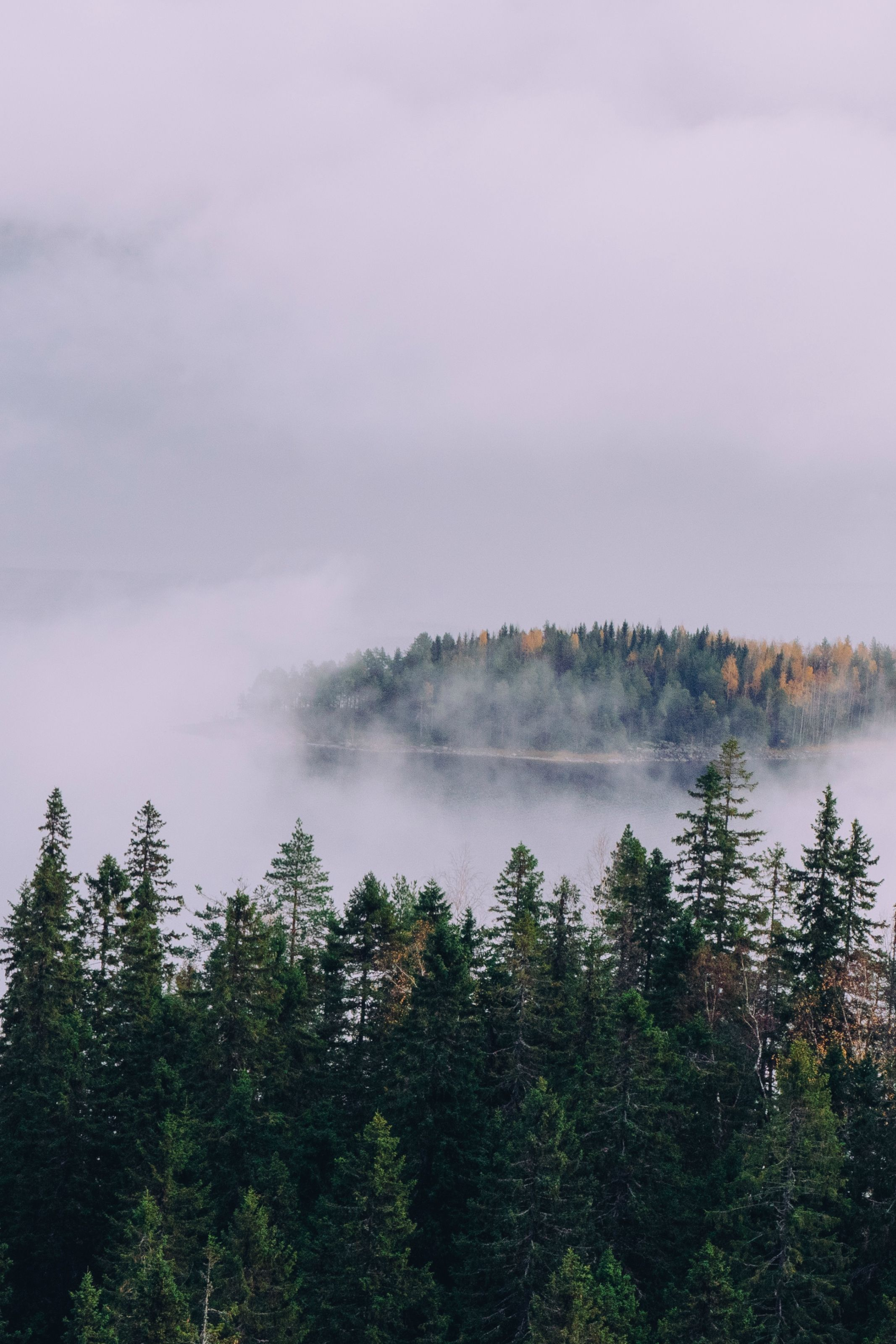 Foggy forest nature photography. Simple living lifestyle ...