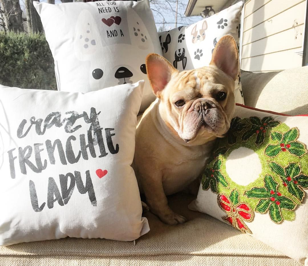 French Bulldog Delaware Ohio