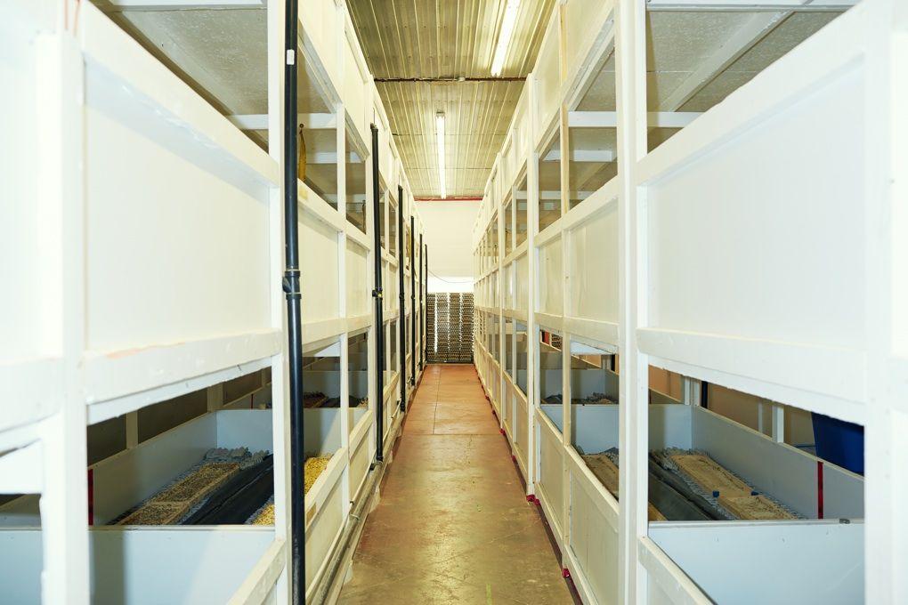 Insect breeding facilities - Google 검색
