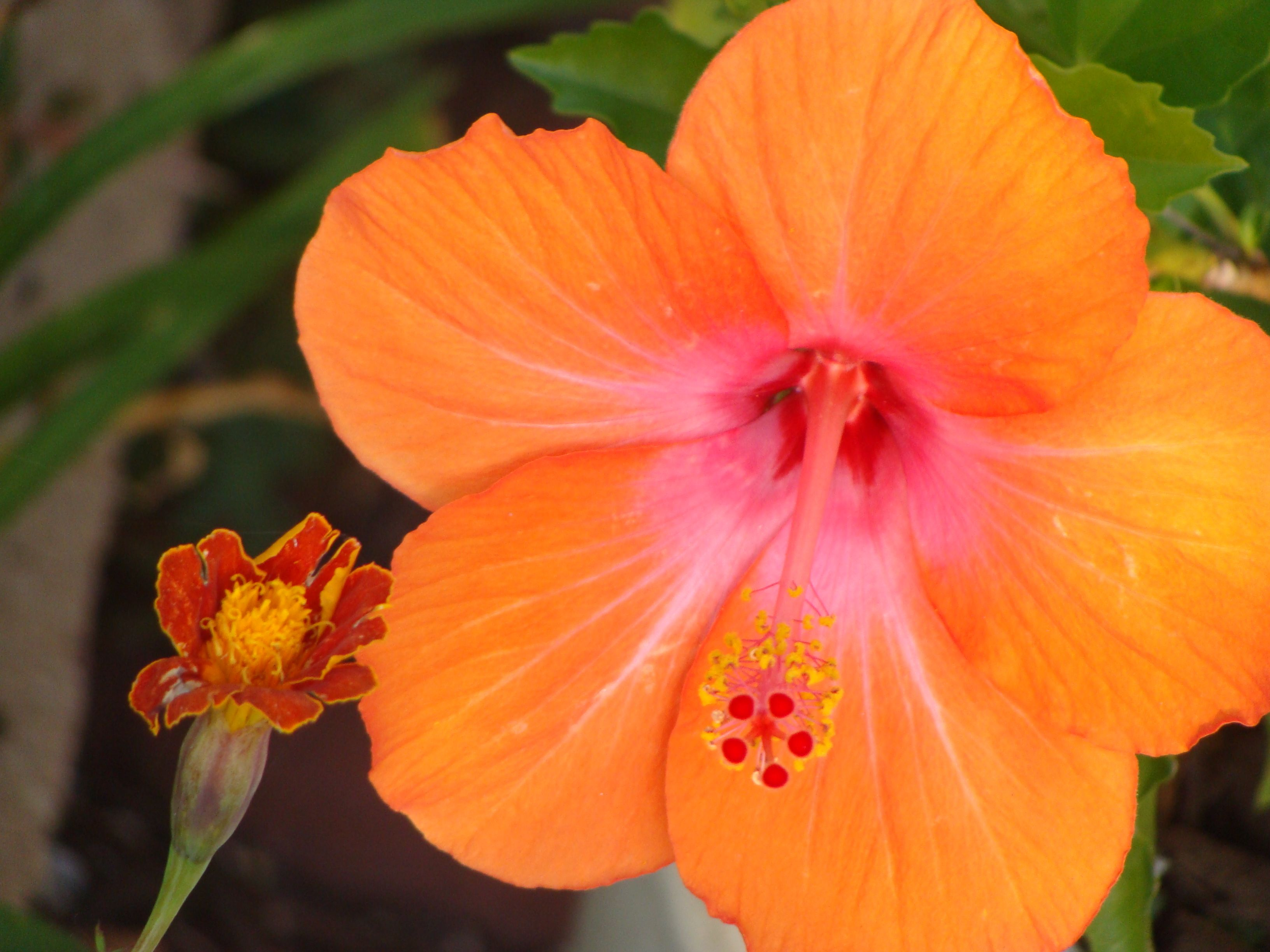 bright colored flower | Nature | Pinterest
