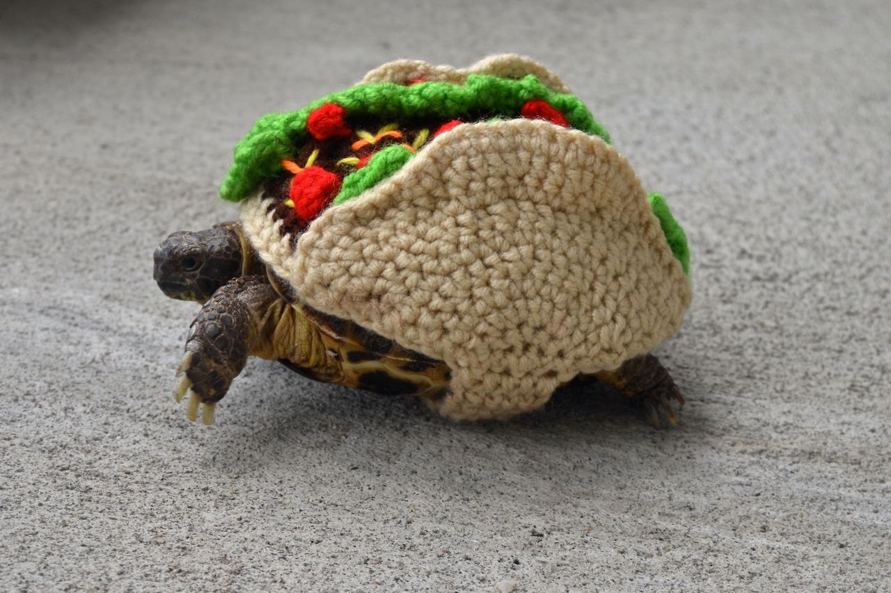 6 Times Taco Tuesday Touched Greatness Through Knit & Crochet - Turtle Taco by Katie Bradley