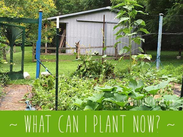 What Vegetables Can You Plant Now In Northern Virginia?
