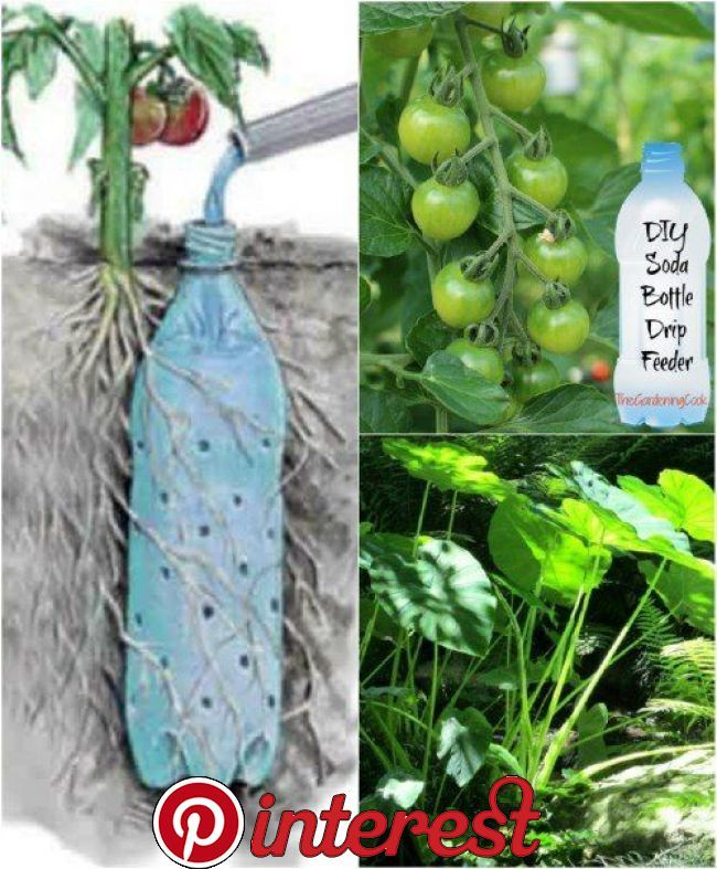 100 Expert Gardening Tips, Ideas and Projects that Every Gardener Should Know   We're right in the middle of spring, the perfect time to start planting flowers, vegetables, herbs, and more! Gardening season is upon us and it's in full swing. Whether you are brand new to gardening