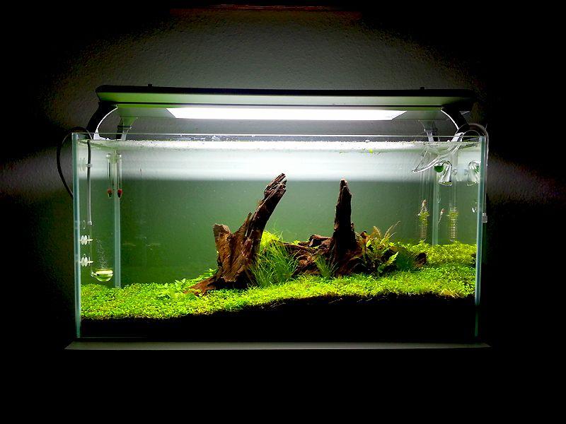 Explore Aquarium Ideas, Aquarium Fish, And More!