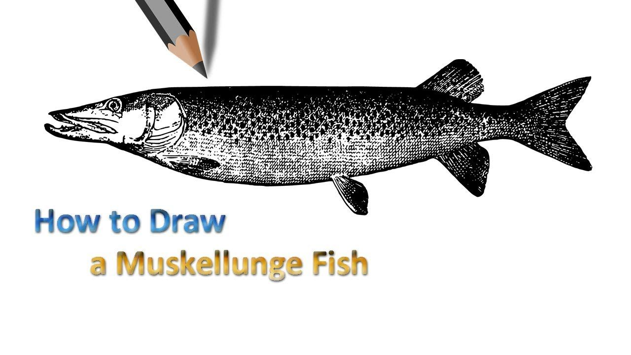 Dogfish Drawing | Step by Step Drawing | Pinterest | Easy drawings for dogfish drawing  45ifm