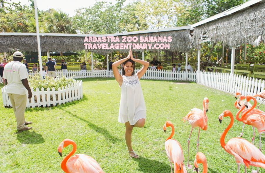 28357fb8a70b09bb990405d50887c9dd - Nassau Bahamas Ardastra Gardens And Zoo