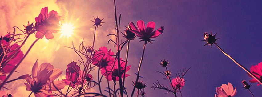 Floral Facebook Covers: Nice Flower At Sunrise Facebook Cover Photo