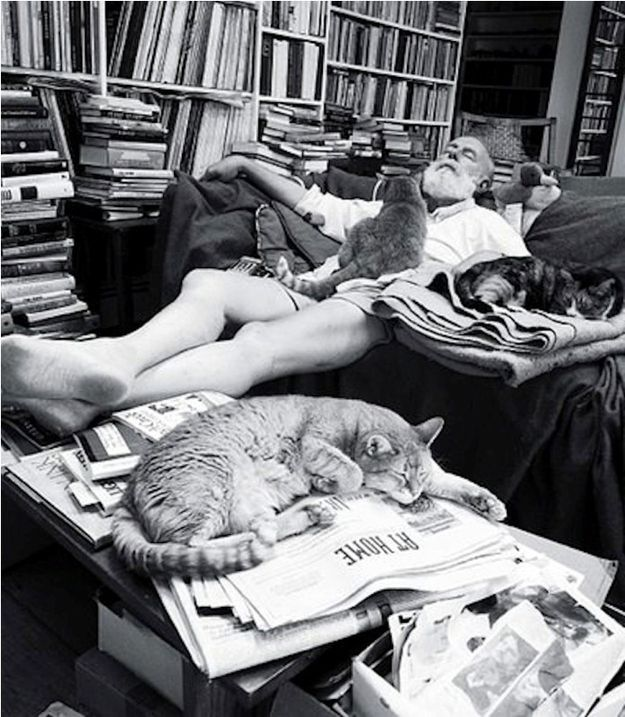 "Edward Gorey, known for his macabre, gothic illustrated books including The Gashlycrumb Tinies and The Doubtful Guest, as well as for illustrating for others' books such as T.S. Eliot's Old Possum's Book of Practical Cats.   ""Books. Cats. Life is good."" - Edward Gorey"