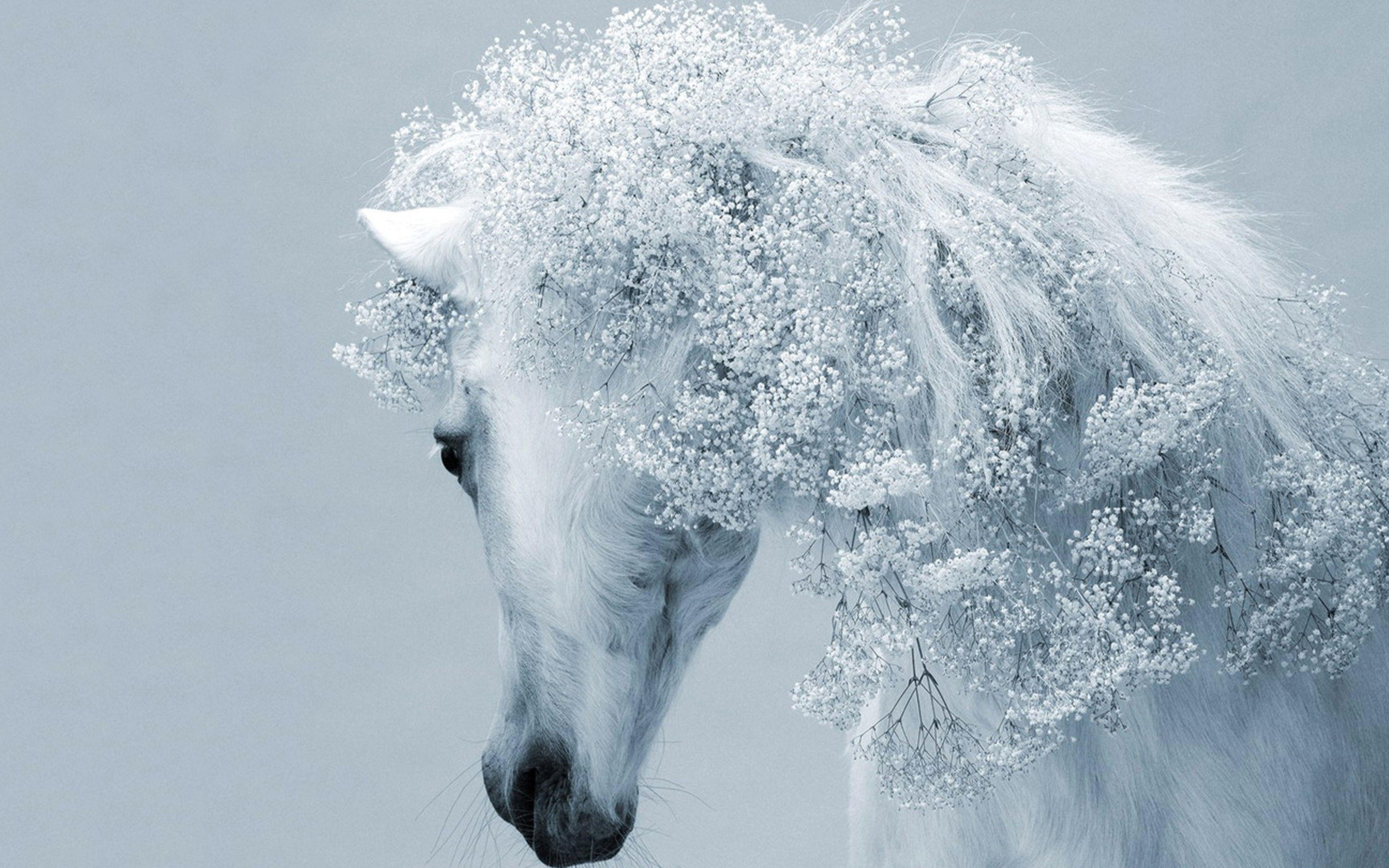 Wallpaper Download 5120x3200 Fantasy White Horse Fantastic Horse Hair Horses Wallpapers Animals Wallpapers Downloa Horse Wallpaper Beautiful Horses Horses
