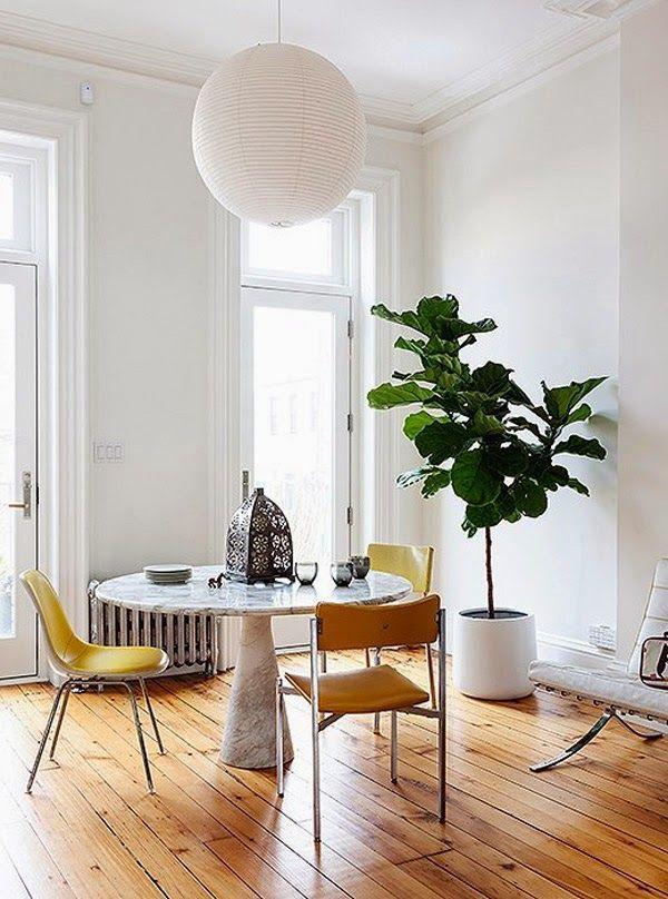 La perfecta planta para decorar: ficus lyrata (o pandurata) · the ...