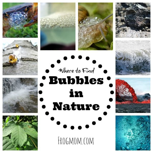 Where To Find Bubbles In Nature Frog Mom Bubbles Things To Do Beach Activities