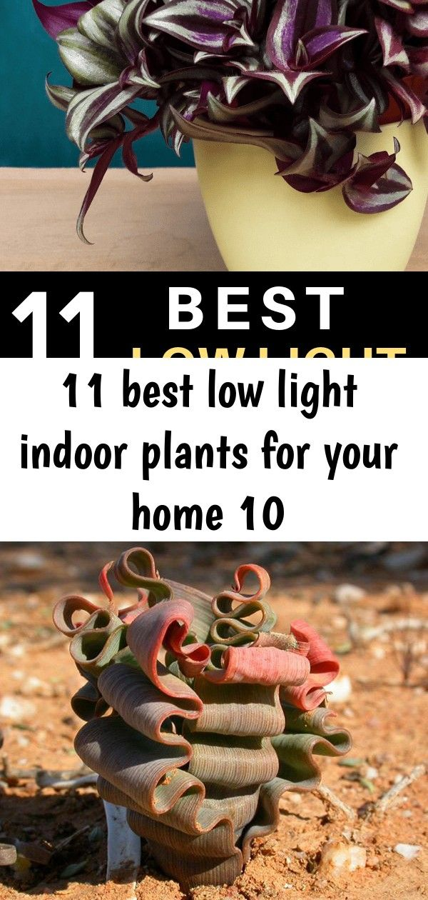 11 best low light indoor plants for your home 10 The best low light indoor plants for your home Awesome ideas for your bathroom living room dining room or any other part...