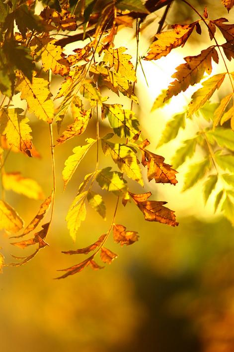 Epingle Par Agathe Fruitrouge Sur Autumn Photo Automne Couleurs D Automne Fond Ecran Gratuit