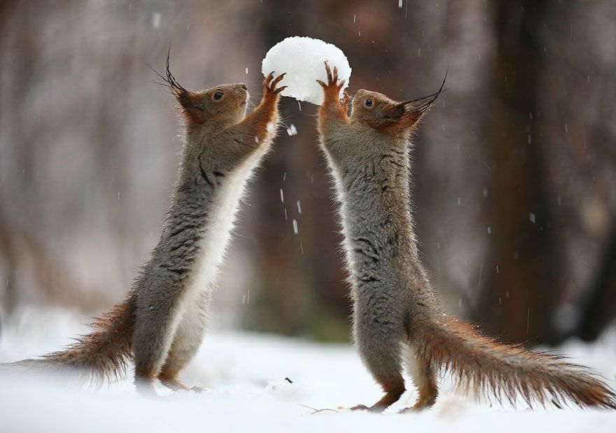 Ecureuil Boule /à neige