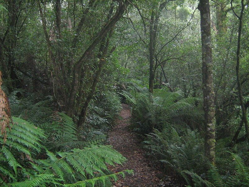 Forest, possibly temperate rain forest