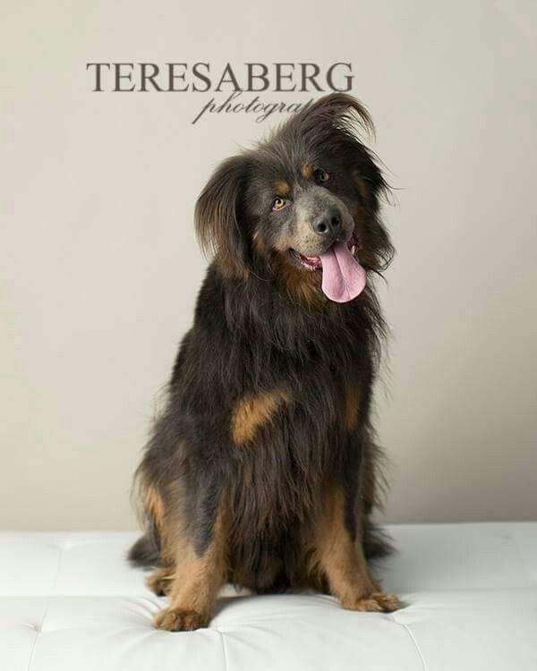 Pets image by Misty James on Pets Dogs, Dog adoption