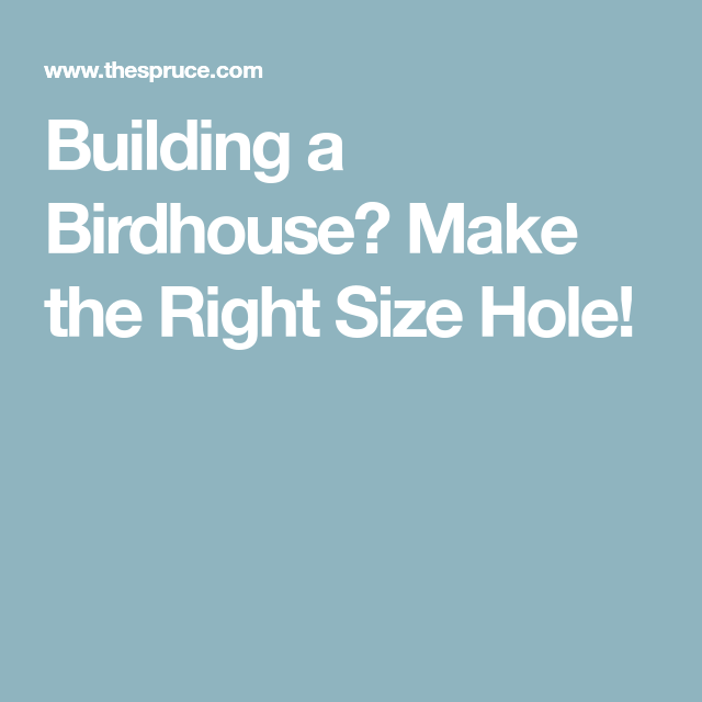 Building A Birdhouse Make The Right Size Hole Bird Houses Bird Houses Diy Bird House Plans