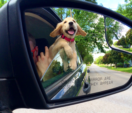 Puppy's reflection in rearview mirror