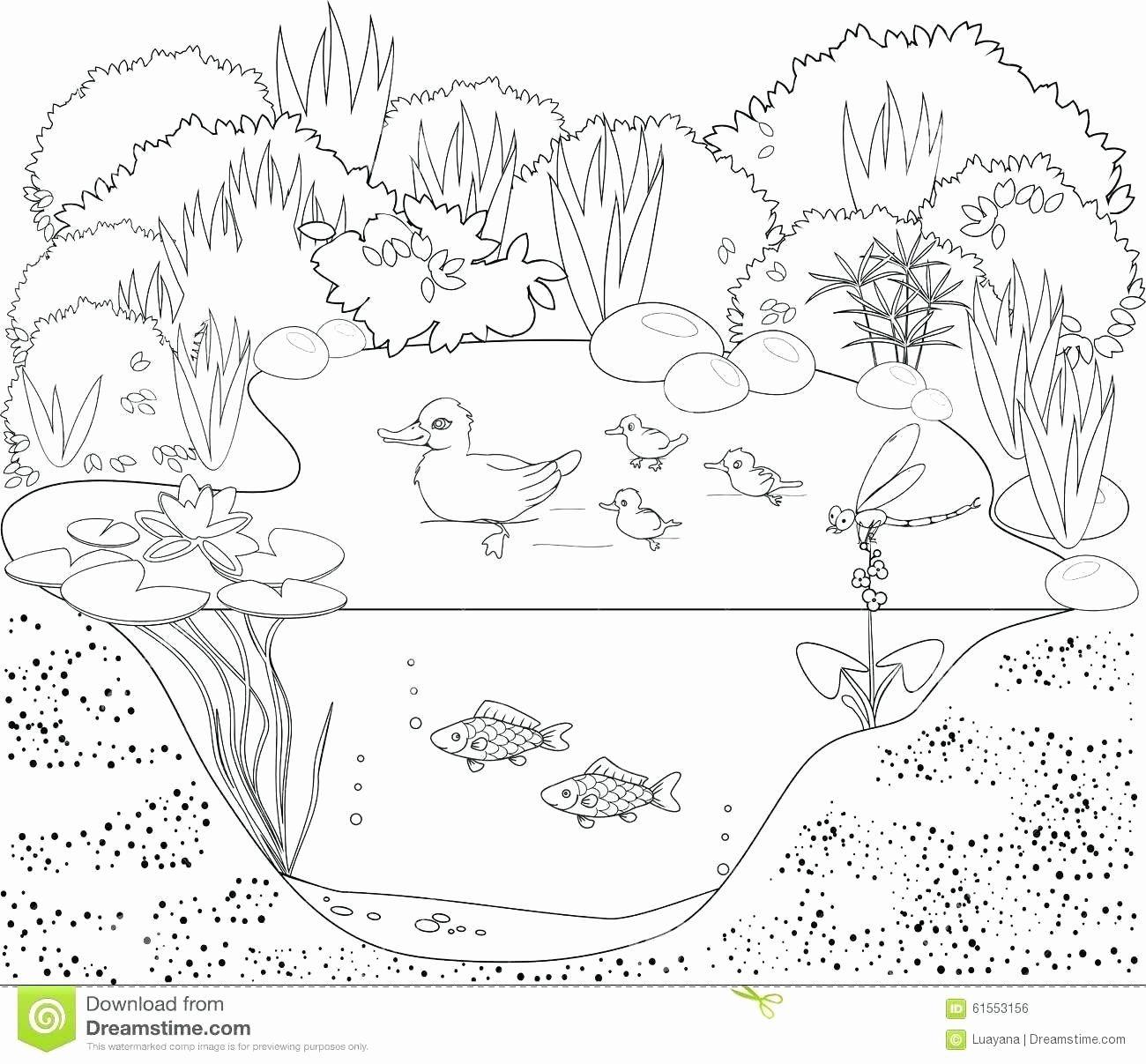 Sea Plants Coloring Pages Luxury Coloring Pages Aquatic Plants Album Sabadaphnecottage