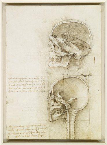 Da Vinci Leonardo Da Vinci Arte De Anatomia Humana Arte De Anatomia