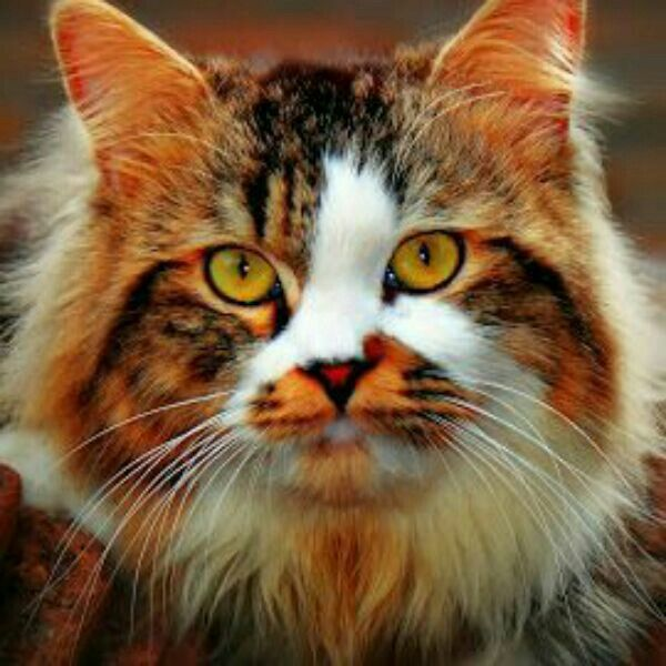 Beautiful cats image by cemal kılıç on animals, our