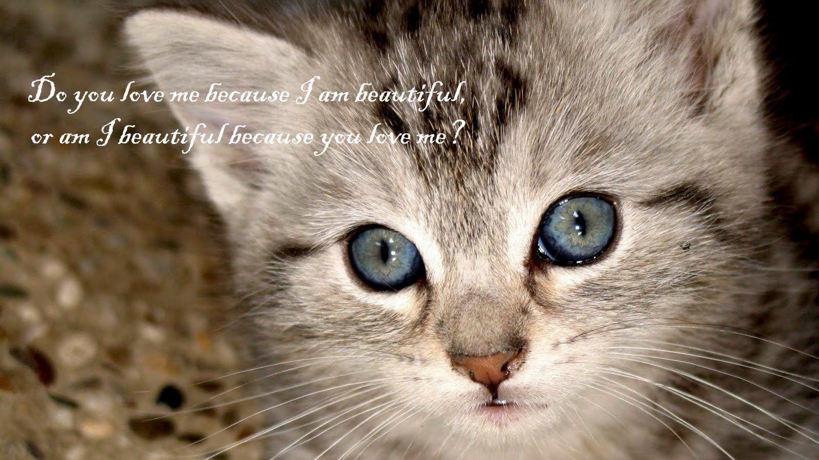 Pin Caitlin Hannah Cat Aesthetic Cat Wallpaper Cute Cat Wallpaper