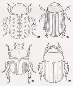 coloring pages for kids egypt dung beetle | scarab colouring pages (page 2) #insects