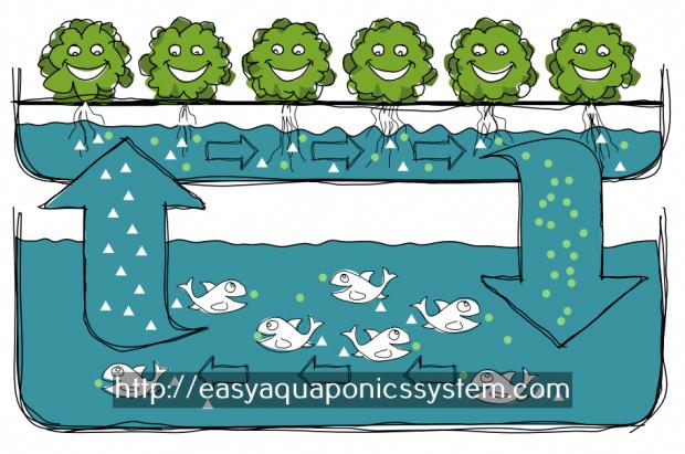 aquaponics basics - hydroponic raft system design aquaponics