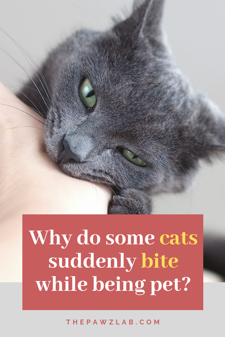 Why Do Cats Bite? A Sign Of Aggression Or Affection Cat