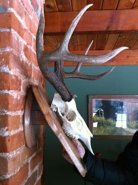 Deer Head Plaque Patterns