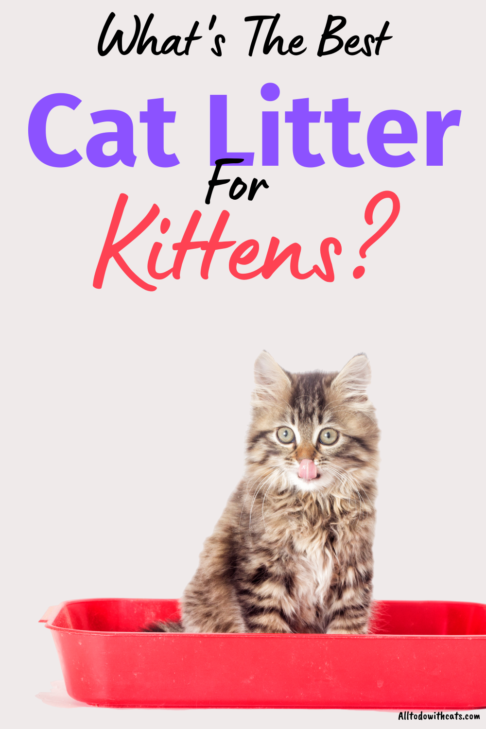Discover The Best Cat Litter For Kittens Everything You Need To Know In 2020 Best Cat Litter Cat Litter Smell Cats