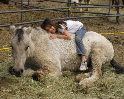 WONDERFUL CURLY HORSE WITH HIS GIRL )
