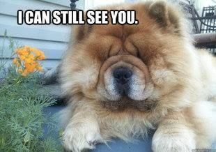 Chow Chow Charm Dogs Fluffy Animals Chow Chow Dogs