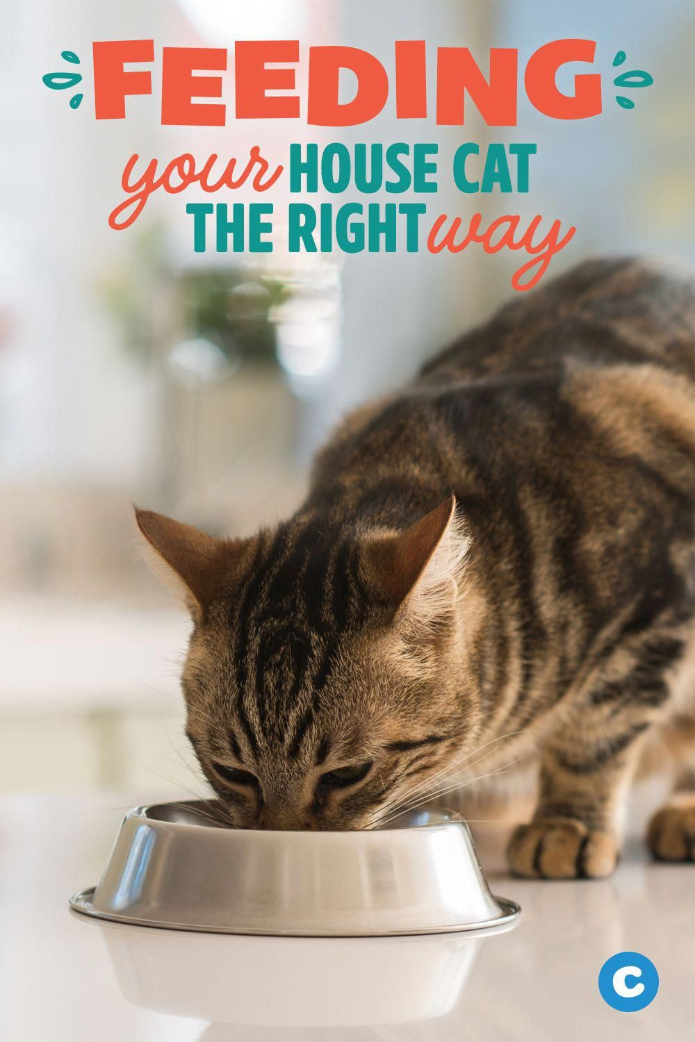 Easy Cat, Cat Food Advisor, Homemade Cat, Cat Food