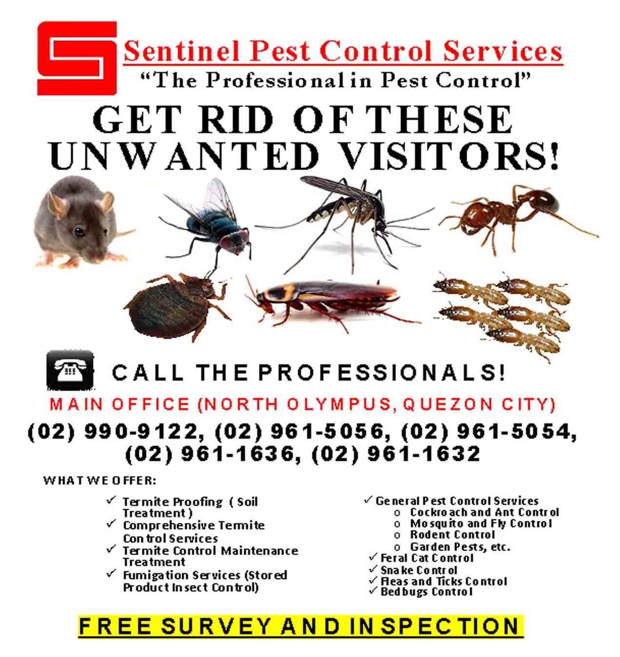 Services Pest Control Cockroach Sentinel Termite Service Professional Fumigation Pests Pest Control Pest Control Services Pest Prevention