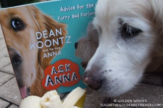 Dean Koontz And His Dog Anna Dean Koontz Dogs Dogs Golden