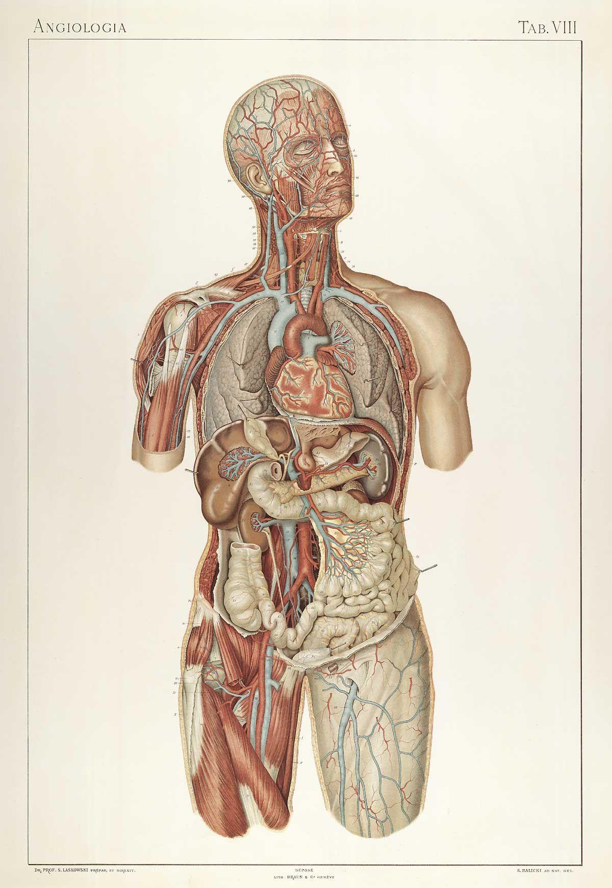 Sigismond Laskowski: Anatomie normale du corps humain: atlas ...