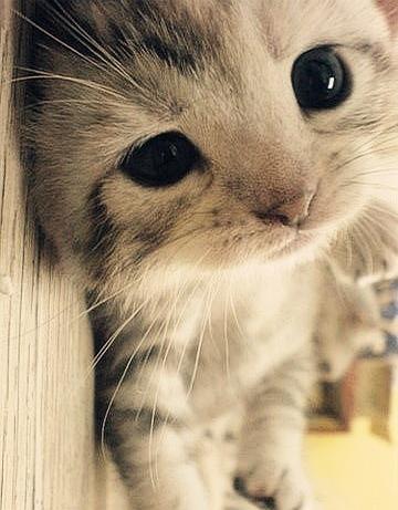 meow, irresistible