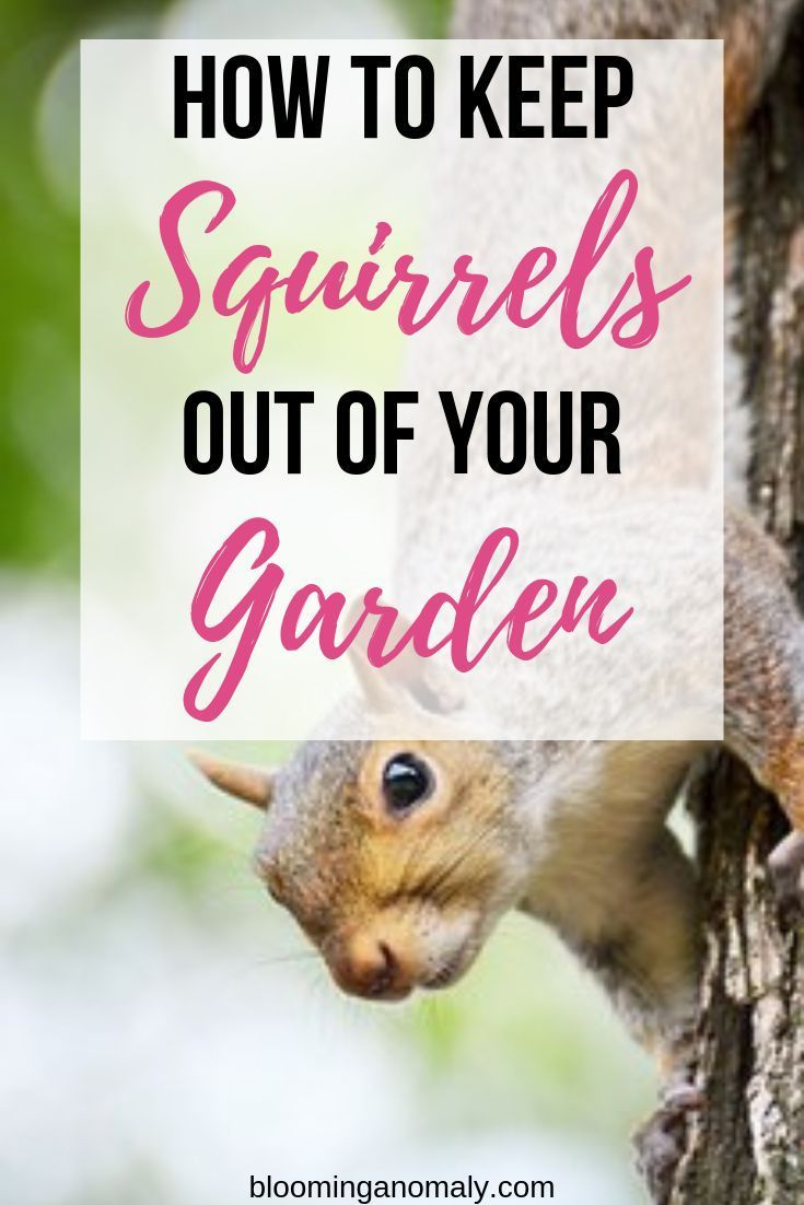 How to keep squirrels out of your garden garden pests