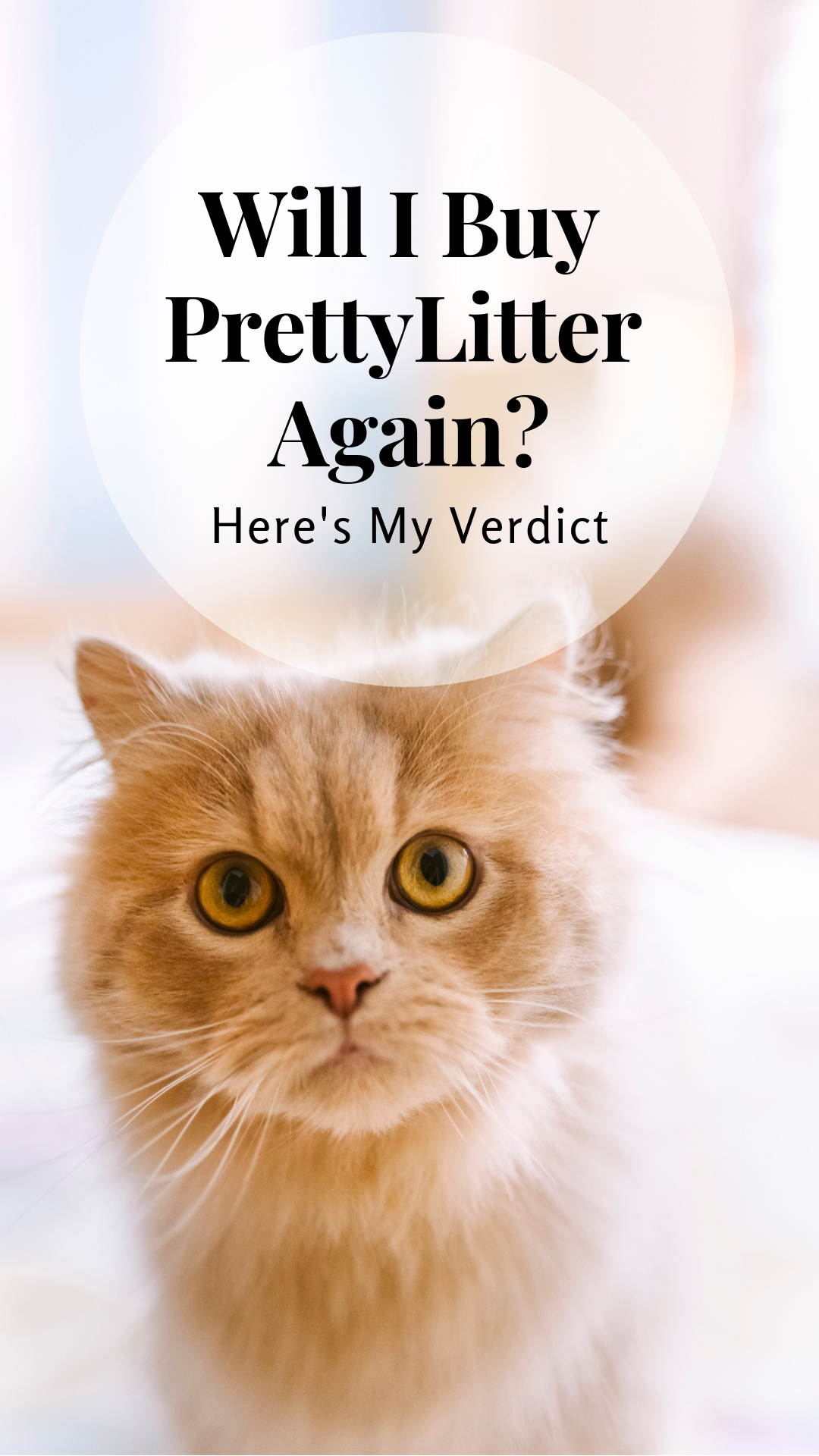 I Hate Cat Litter: Here\'s Why PrettyLitter is Amazing | Cats ...