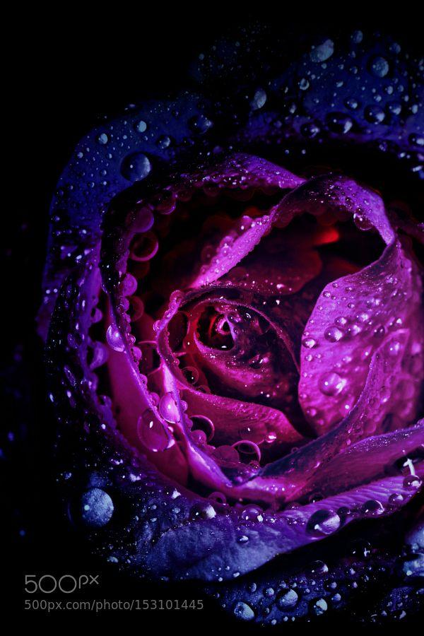 Spiral Galaxy Black Roses Wallpaper Spiral Galaxy Twin Flame Art