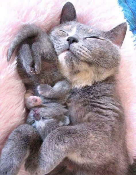 Momma cat and kitty baby.