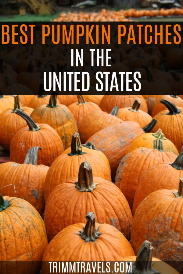 Pumpkin Picking Best Pumpkin Patches In The Usa Trimm Travels In 2020 Usa Travel Guide Travel Usa Usa Travel Destinations