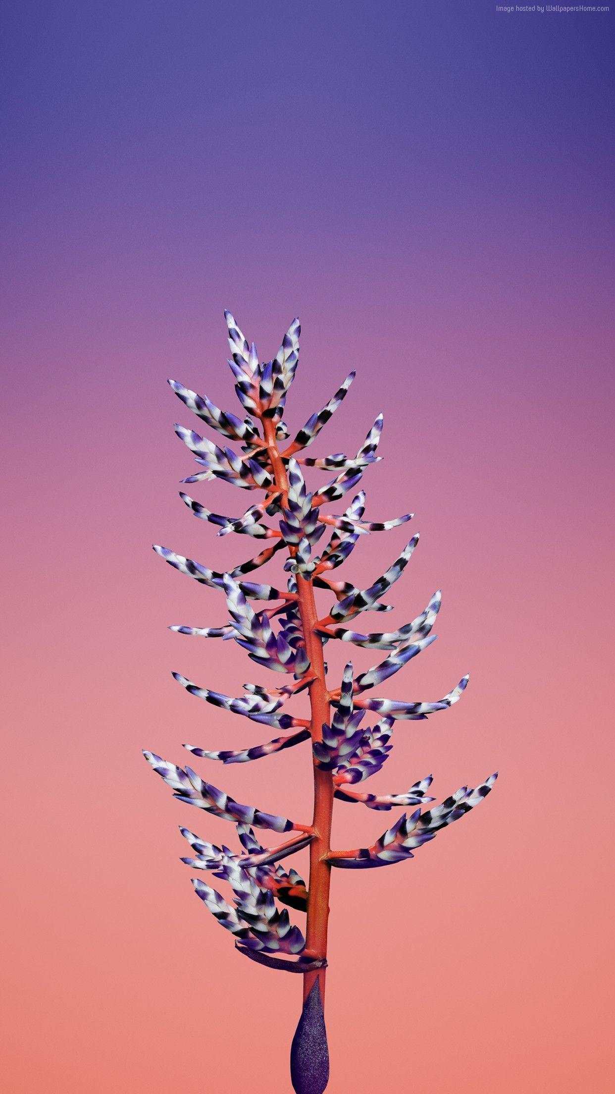Ios 11 Flower Blue Abstract Apple Wallpaper Iphone X Iphone 8 Clean Beauty Colour Ios Minimal Iphone 7 Iphone 6 Seni Bunga