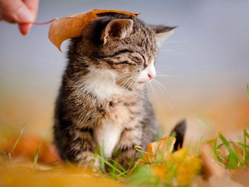Streichel Mich Flauschig Weiche Katzen Sind Einfach Zum Kuscheln Niedliche Tierbilder Katzen Und Katzenbabys